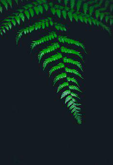 Leaf, Fern, Plant, Nature, Isolated, Botanical, Design