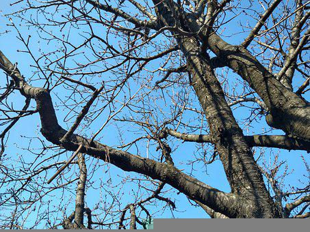 Tree, Twigs, Blue Sky, Leafless Branches