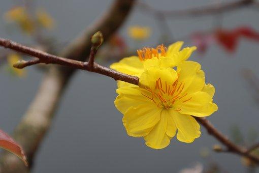 Leopard, Vietnam, Tree, Flower, The Lunar New Year