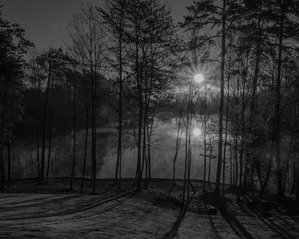 Sunrise, Fog, Morning, Lake, Mood, Dawn, Trees, Foggy
