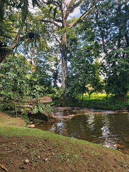 River, Tree, Nature, Forest, Water, Costa Rica