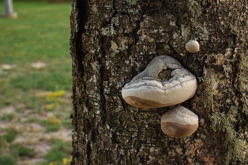Tree, Mushroom, Outgrowth, Nature, Trunk, Mushrooms