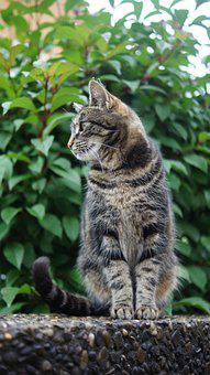 Cat, Summer, Nature, Animal, Pet