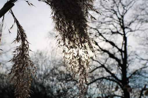 Hiver, Neige, Arbre, Feuilles, Tree, Des Arbres