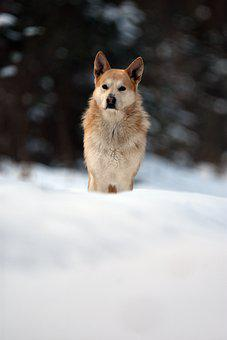 Dog, Doggy, Nice, Animal, Pet, Sweet, Fur, Ears, Winter