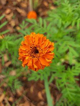 Flower, Plant, Nature, Blossom, Petals, Garden