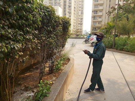 Gardener, Watering, Plants