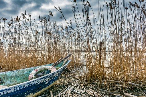 Boat, Rhône, Reeds
