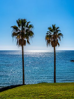 Palm Trees, Seascape, Sea, View, Sea View, Water, Ocean