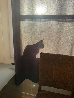 Cat, Shadow, Animal, Hiding