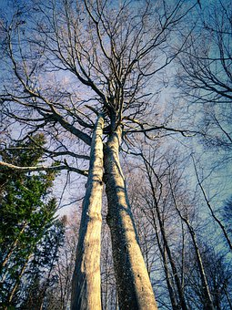Trees, Trunks, Forest, Branches, Tree Trunks