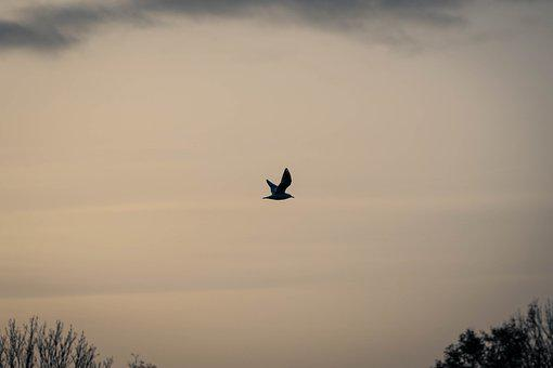 Bird, Animal, Bird Watching, Freedom, Flying, Wallpaper
