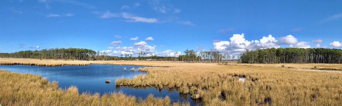 Blackwater National Wildlife Refuge, Park, Wildlife