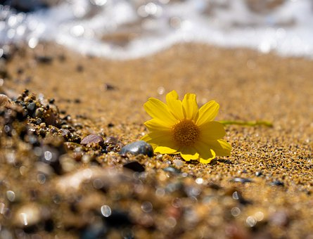 Flower, Sea, Yellow Flower, Waves, Foam, Sand, Rocks