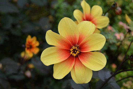 Flowers, Yellow, Bloom, Nature, Blossom, Spring, Petals