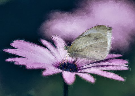 Butterfly, Flower, Photo Art, Insect, Animal, Plant