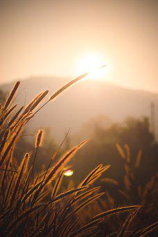 Cattails, Sunset, Backlighting, Silhouettes, Plants