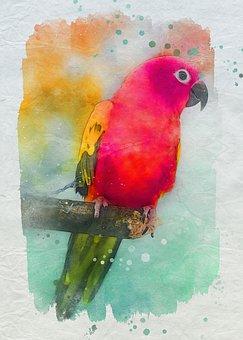 Bird, Parakeet, Parrot, Wildlife, Exotic
