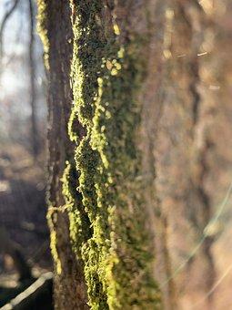 Moss, Tree, Sunrise, Brand, Wood, Forest, Trees