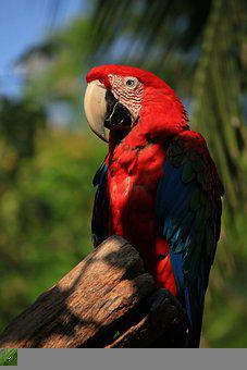 Macaw, Parrot, Bird, Colorful, Perched, Plumage