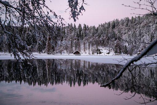 Conifers, Lake, House, Snow, Lake House, Cottage, Cabin