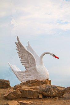 Geese, Duck, Goose, Animals, Cute, Plumage, Creature