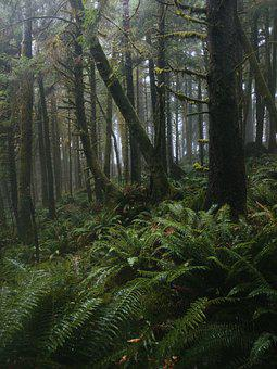 Beautiful, Cold, Dark, Ferns, Foggy, Foliage, Forest