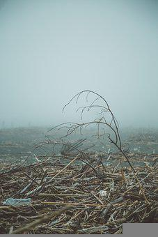 Fog, Mist, Beach, Fisherman, Fishing, Nature, Landscape