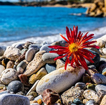 Red Flower, Flower, Rocks, Growing, Broken, Sea