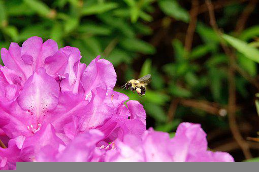 Bee, Insect, Flower, Bloom, Garden, Honeybee, Nature