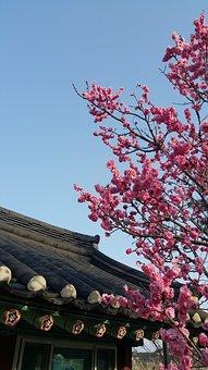 Sky, Flowers, Cherry Blossom, Plants, Nature, Landscape