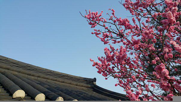 Republic Of Korea, Gangneung, Traditional, Hanok