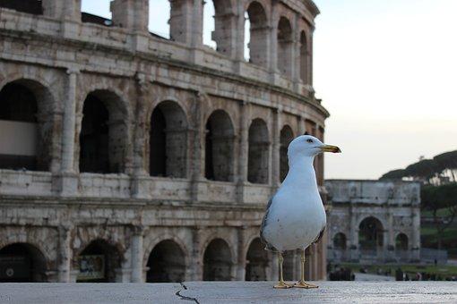Rome, Italy, Architecture, City, Colosseum, Tourism