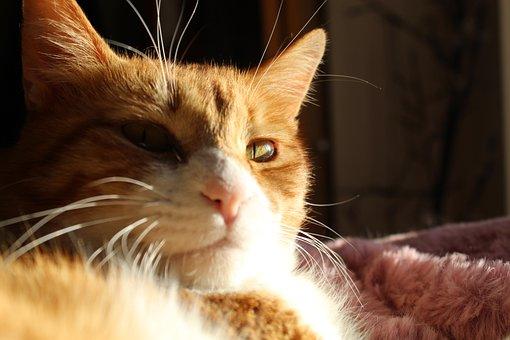 Cat, Kitty, Kitten, Pet, Animal, Feline, Cute, Adorable
