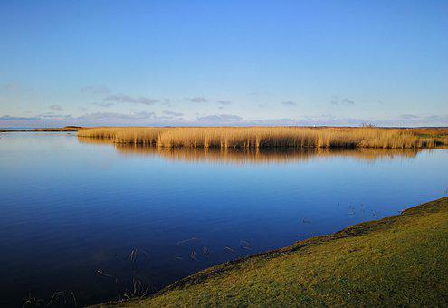 Reed, Lake, Bank, Reflection, Water, Grasses, Sky