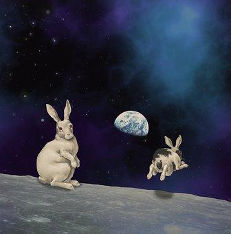 Pets, Animal, Mammal, Moon, Lunar, Earth, Planets