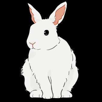 Bunny, Rabbit, White, Hare, Animal, Cute, Nature, Ears