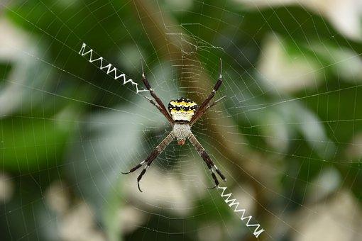Spider, Web, Nature, Spiderweb, Circular Web