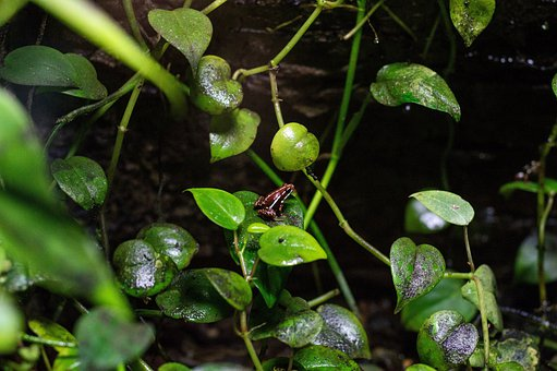 Frog, Green, Plant, Amphibian, Nature, Frogs, Wildlife