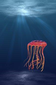 Jellyfish, Underwater, Sea, Ocean, Aquatic, Water