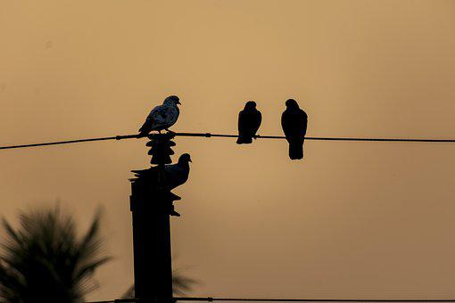 Birds, Pigeons, Wire, Perched, Perched Birds