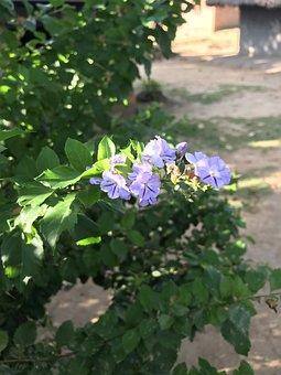 Home, Hedge, Purple