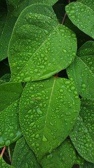 Raindrops, Rain, Water, Water Drops, Moisture, Dew