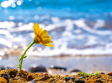 Yellow Flower, Flower, Growing, Sea, Waves, Sand