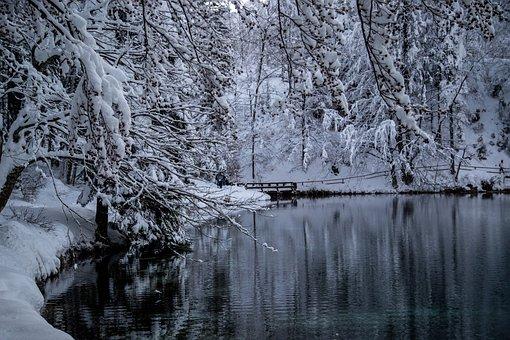 Conifers, Snow, Lake, Bridge, Coniferous, Trees