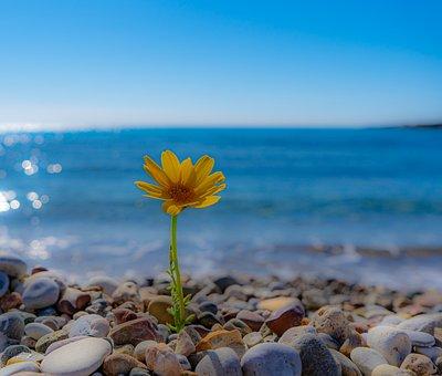 Soft, Yellow Flower, Flower, Growing, Sea, Waves, Sand