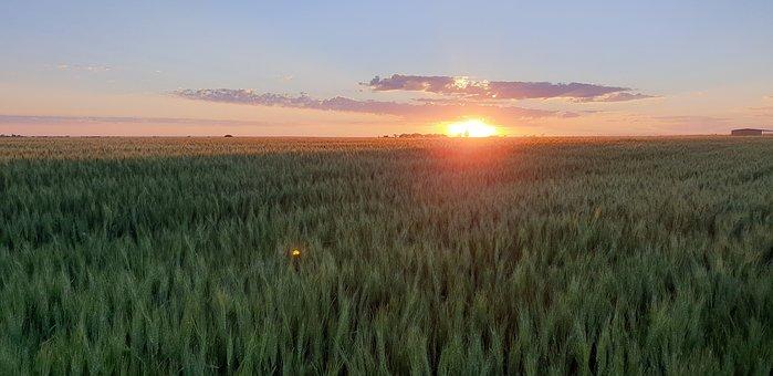 Dawn, Agriculture, Farm, Sunlight, Growth, Summer