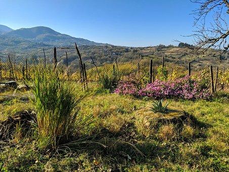 Georgia, Village, Tourism, Landscape, Travel, Mountains