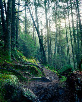 Trees, Forest, Path, Woods, Woodlands, Tall Trees