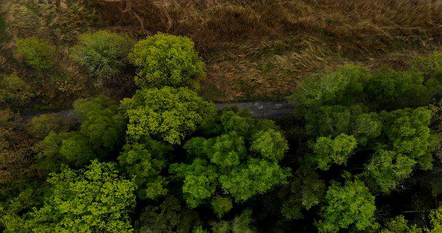 Trees, From Above, The Road, Grass, Summer, Woods